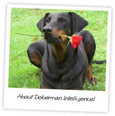 About Doberman Intelligence
